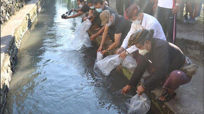 Gencarkan Gerakan Gemar Makan Ikan, Pemkab Badung Siap Salurkan Benih Ikan untuk Masyarakat