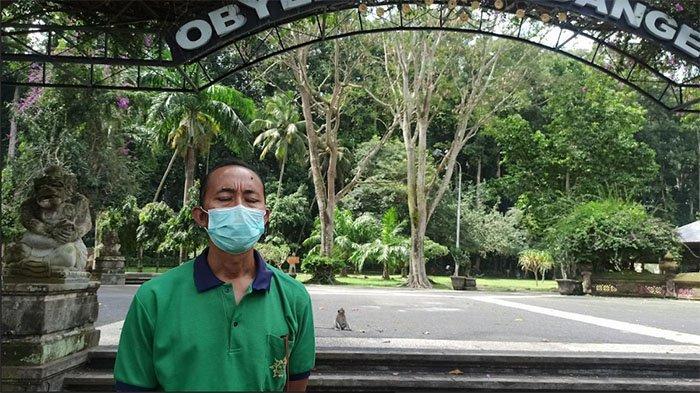 Besok, Objek Wisata Sangeh Akan Lakukan General Cleaning Sebelum Dibuka Bagi Pengunjung
