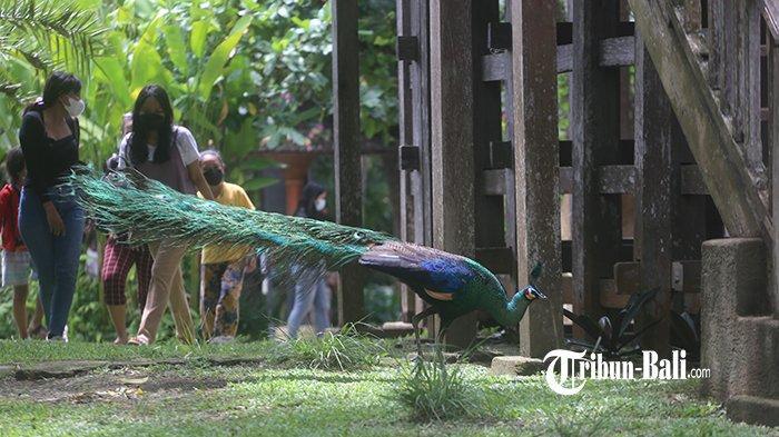 Bali Bird Park Gianyar Sudah Buka, Terapkan Aplikasi PeduliLindungi