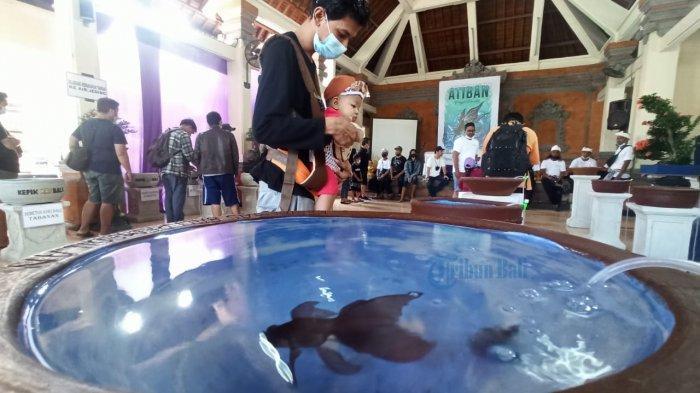 Kepik Mas Bali Gelar Pameran Ikan Mas Koki di Denpasar, Hadiah Kang Cing Wie Kepada Raja Jaya Pangus