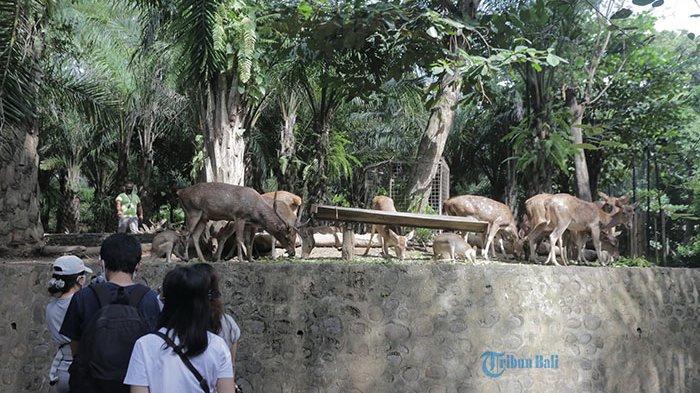 Bali Zoo Kembali Dibuka untuk Umum di Masa New Normal, Ada Promo Menarik bagi Pengunjung