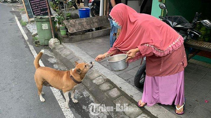 Seorang penjual gorengan di Canggu Bali, Heni Fitriyani ketika sedang memberikan makan kepada anjing yang sering datang ke rombong gorengannya pada, Kamis (8 April 2021)