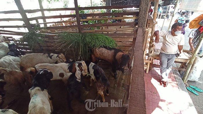 Suasana penjualan hewan kurban di sekitar Jalan Maruti, Denpasar, Sabtu 17 Juli 2021. Menurut Pedagang, menjelang hari raya Idul Adha 1442 H permintaan hewan kurban berupa kambing dijual dengan harga Rp2 juta hingga Rp 5 juta tersebut mengalami penurunan akibat pandemi Covid-19.