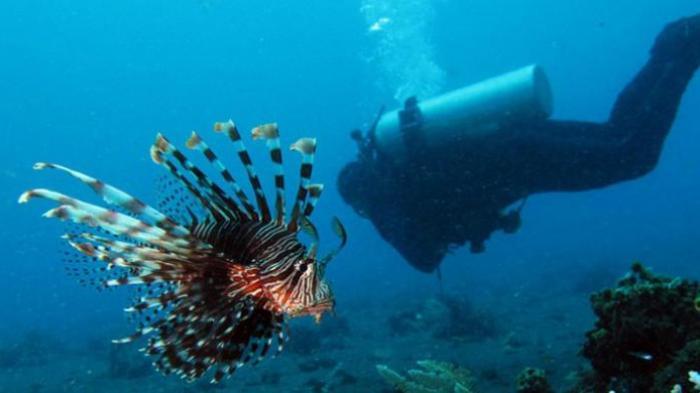 3 Cagar Biosfer Baru di Indonesia Ini Resmi Ditetapkan dalam Sidang UNESCO 2020
