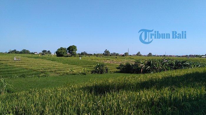 Info Perkiraan Cuaca di Bali, Bagian Barat Berpotensi Hujan Ringan