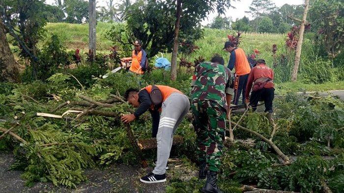 Antisipasi Pohon Tumbang, Petugas Gabungan Pangkas Pohon Perindang di Jalur Denpasar-Singaraja
