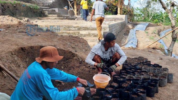 Petani Sidan Gianyar Manfaatkan Lahan Tak Digarap Untuk Holtikultura