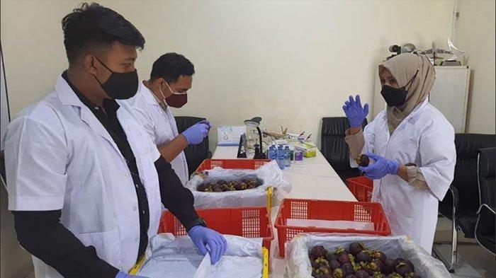 Sempat Terhenti Akibat Pandemi, Manggis Bali Kembali Diekspor ke China