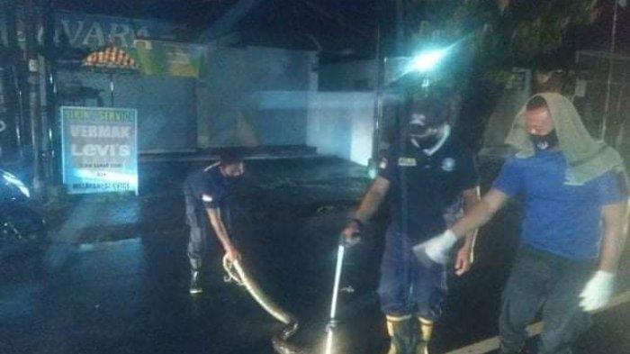 Ular Piton Sepanjang 2,5 Meter Melintang di Depan Krisna Oleh-Oleh, Sempat Halangi Pengguna Jalan