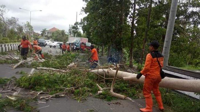 Pohon Tumbang Akibat Angin Kencang, Gianyar Siapkan Penanganan Bencana