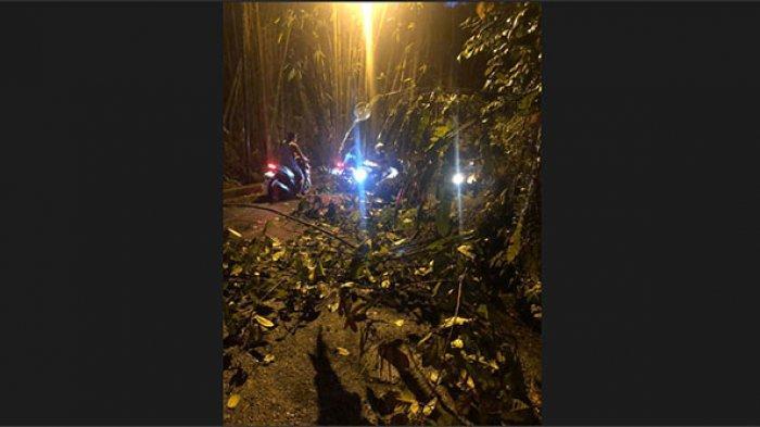 Akibat Diguyur Hujan Lebat, Pohon Loa Tumbang di Ubud Gianyar hingga Sempat Ganggu Lalu Lintas