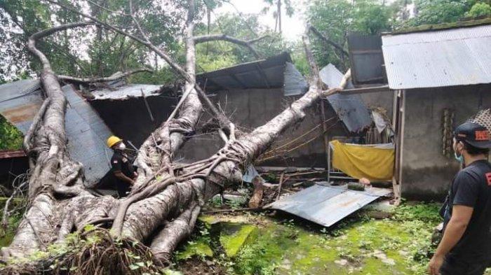 Pohon Beringin Tumbang Menimpa Atap Pura Subak Abian di Karangasem Bali