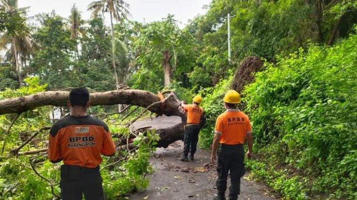 Hujan Disertai Angin Kencang, Pohon Tumbang Terjadi di Beberapa Titik di Karangasem Bali