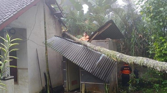 Pohon Kelapa Tumbang di Karangasem Menimpa Rumah dan Dapur Warga