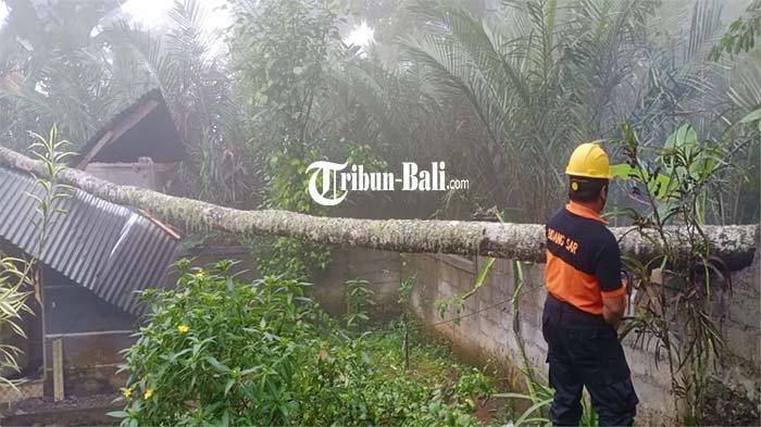 Hujan Disertai Angin Kencang di Karangasem Mengakibatkan Pohon Tumbang di Beberapa Titik