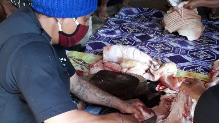 Dinas PKP Bangli Melakukan Pemeriksaan, Tidak Ditemukan Adanya Penyakit Pada Babi di Bangli