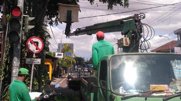 Antisipasi Pohon Tumbang Saat Musim Hujan, DLHK Denpasar Lakukan Perompesan Pohon Perindang