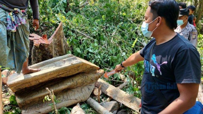 I Made Meninggal Setelah Tertimpa Pohon Gondang di Karangasem Bali