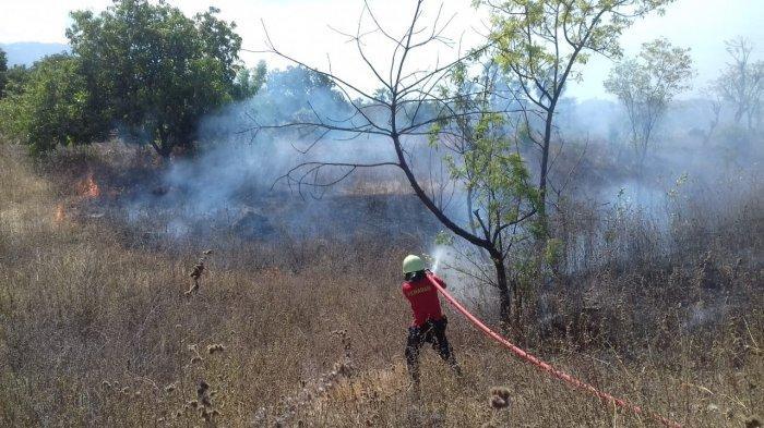 Dalam Seminggu Terdapat 6 Kasus Kebakaran Lahan di Karangasem