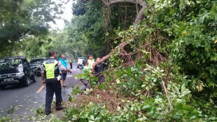 Wargono Alami Patah Kaki Kiri, Tertimpa Pohon Tumbang Saat Melintas di Hutan Cekik Jembrana