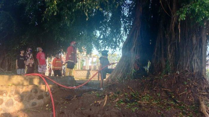Dua Wanita Tiba-tiba Menangis Histeris Saat Kebakaran Pohon Beringin di Pura Manik Bingin Klungkung