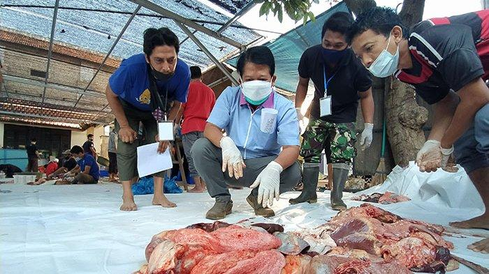 Petugas Dinas Pertanian Buleleng Temukan Cacing Hati pada Enam Ekor Sapi Kurban