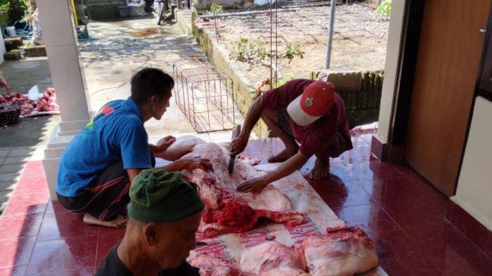 Jelang Hari Raya Galungan, Dinas PKP Bangli Lakukan Pemeriksaan Babi Selama Dua Hari
