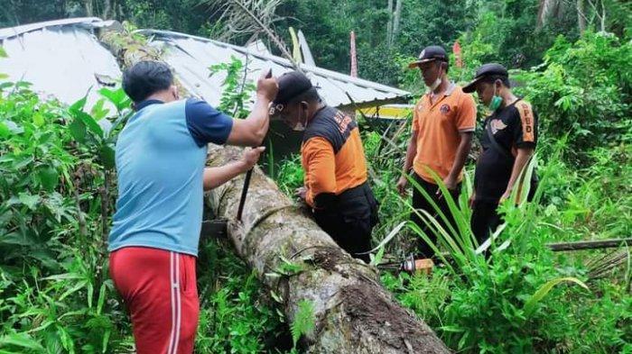 Pohon Aren Tumbang Timpa Wantilan Pura Keluarga di Manggis Karangasem