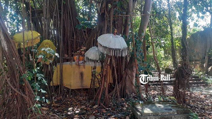 Kisah Pohon Bunut Suci di Taman Festival Bali