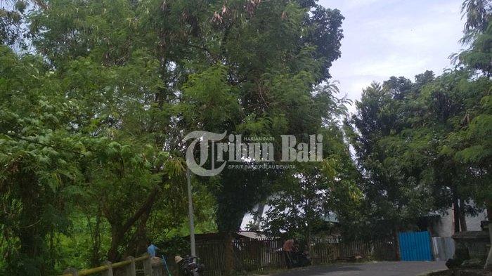 Pohon di Jalan Seruni Klungkung Perlu Dipangkas, Ini Reaksi Pemerintah
