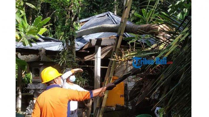 BREAKING NEWS - Hujan Angin, Pohon Kelapa Tumbang Menimpa Rumah Warga di Selumbung Karangasem Bali