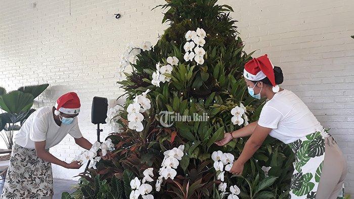300 Tanaman Hias Dijadikan Pohon Natal di Duta Orchid Garden, Nilainya Capai Rp 50 Juta