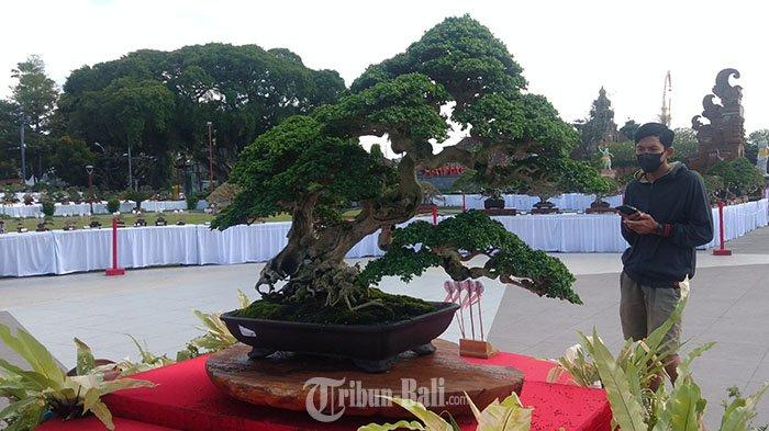Pohon Sancang Wijaya Tedung Terbaik dalam Pamnas Bonsai Gianyar 2021, Begini Proses Penilaiannya