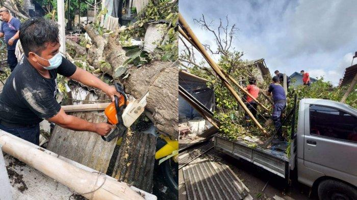 Dua Hari Ini, 2 Pohon Tumbang di Denpasar, Satu Timpa Bangunan, Pemilik Merugi Puluhan Juta Rupiah