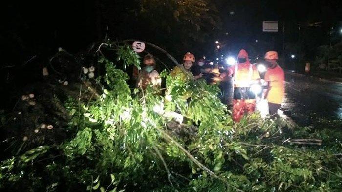 Tercatat Sepuluh Pohon Tumbang Saat Hujan Lebat di Jembrana Bali
