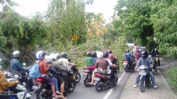 Hujan Disertai Angin Kencang di Klungkung, Sebabkan Pohon Tumbang di Beberapa Lokasi Ini