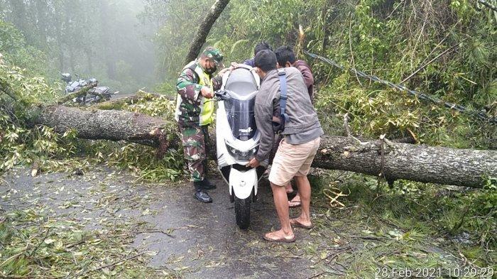 Hujan Sehari, Empat Desa di Bangli Bali Dilanda Pohon Tumbang dan Tanah Longsor