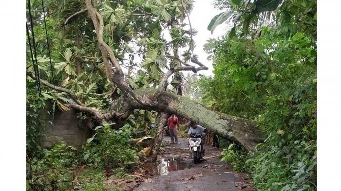 Hujan dan Angin Kencang Terjang Klungkung Semalam, Sebabkan Pohon Tumbang Hingga Bangunan Pura Roboh