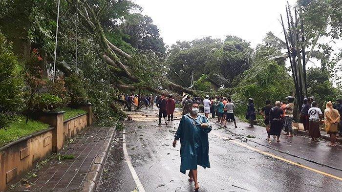 Hujan Deras Disertai Angin Kencang, Pohon Bertumbangan di 3 Desa Klungkung