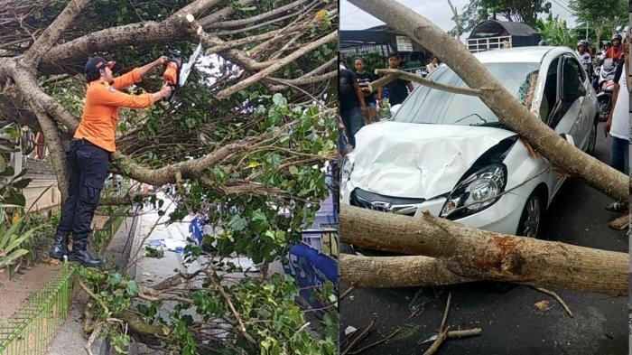 Waspada Pohon Tumbang, Kemarin Seorang Wisatawan Tertimpa Pohon di Pantai Matahari Terbit