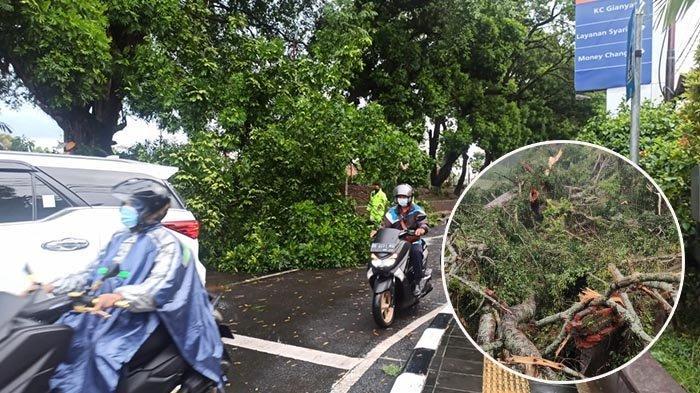 Pohon Beringin Tumbang, Penyengker dan Bale Gong Pura di Tegalalang Gianyar Rusak