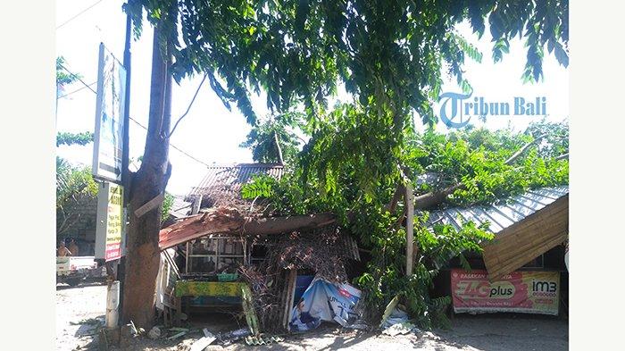 Pohon Tumbang Timpa Rumah Warga, Warga Lari Setelah Dengar Bunyi 'Kreek'