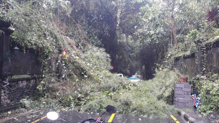 Rumpun Bambu Tumbang, Jalan Tjampuhan Ubud Sempat Tertutup