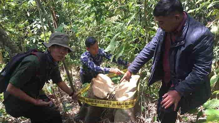 Sukerta Terancam Bui dan Denda Rp 10 Miliar, Tebang 7 Pohon untuk Bangun Rumah