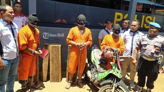 Pelaku Illegal Logging di Buleleng Mengaku Sudah Satu Tahun Beraksi