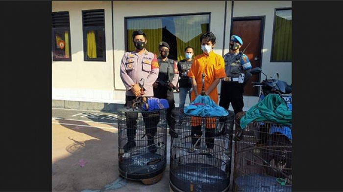 Pencuri Burung asal Bangli Dibekuk Jajaran Polsek Blahbatuh, Korban Merugi Belasan Juta Rupiah