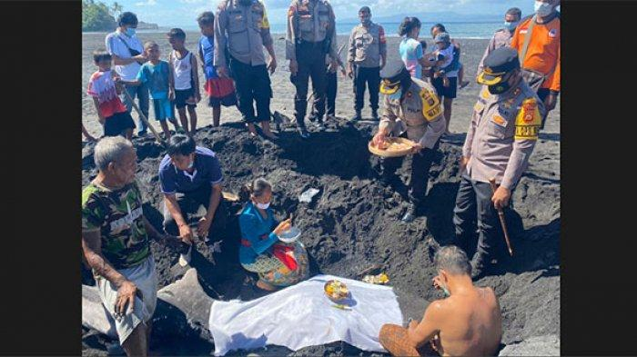 Hiu Tutul Kembali Terdampar di Pantai Tegal Besar Klungkung, Kondisinya Mati & Sirip Telah Terpotong