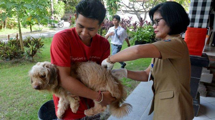 Pemprov Bali Siapkan532.157 Dosis Vaksin Rabies,Dimanfaatkanuntuk Vaksinasi Serentak Tahun 2021