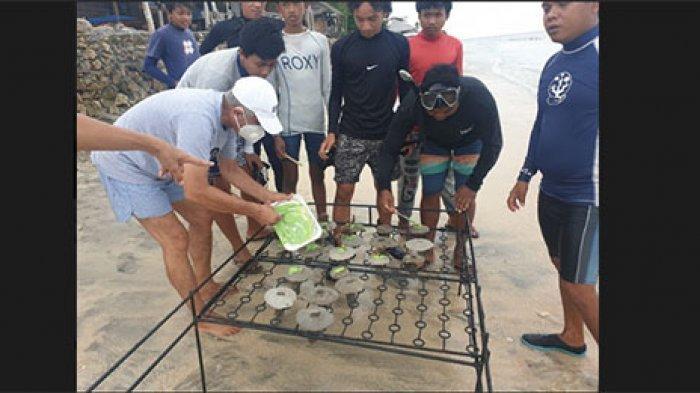 Kondisi Terumbu Karang di Pesisir Nusa Penida Klungkung Mulai Pulih Saat Pandemi Melanda