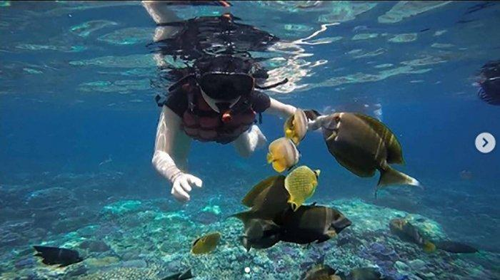Rekomendasi 3 Spot Diving di Bali, Surganya Para Penyelam